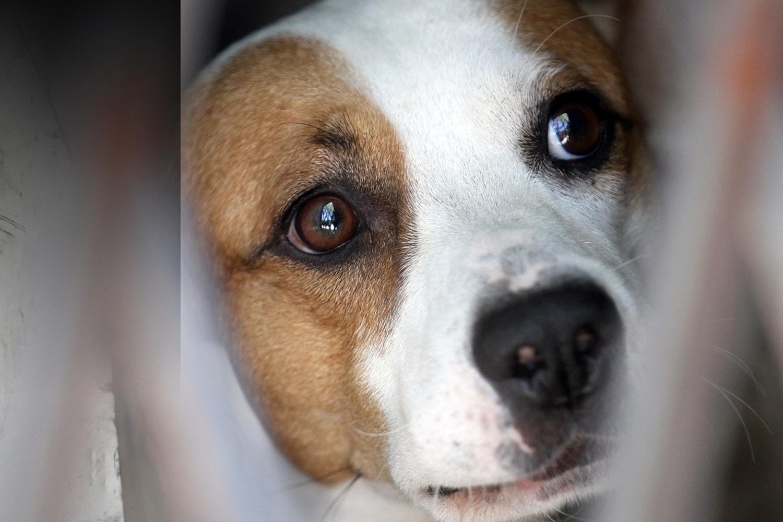 Βαριές οι ποινικές κυρώσεις για την κακοποίηση ζώων